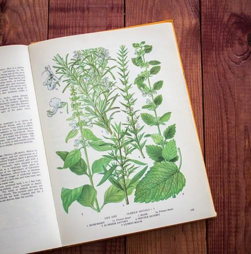 Пищевые растения. Иллюстрация из книги 1971 года. Артикул: tobofp071