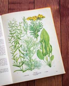 Тархун. Иллюстрация из книги 1971 года. Артикул: tobofp072