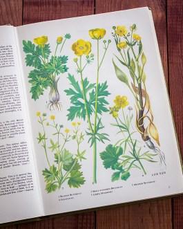 Полевые цветы. Иллюстрация из книги 1973 года. Артикул: tobowf001