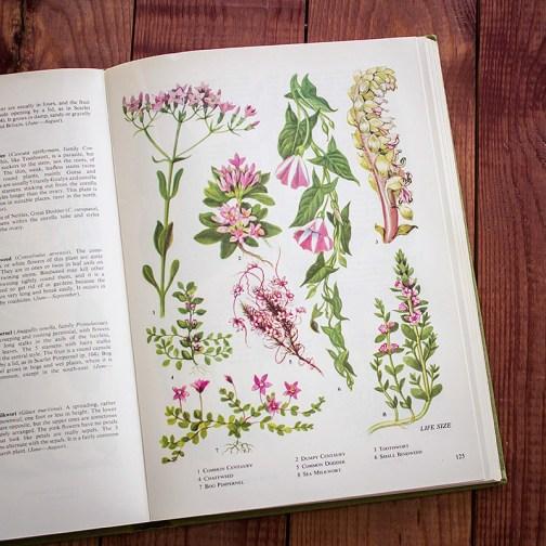 Полевые цветы. Иллюстрация из книги 1973 года. Артикул: tobowf062