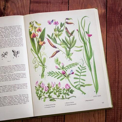 Полевые цветы. Иллюстрация из книги 1973 года. Артикул: tobowf066