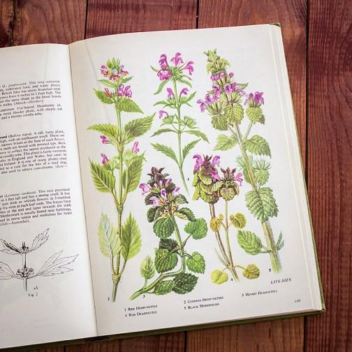 Полевые цветы. Иллюстрация из книги 1973 года. Артикул: tobowf074