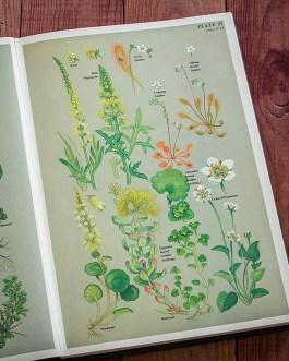 Цветы. Иллюстрация из книги 1977 года. Артикул: twfobane_pl019