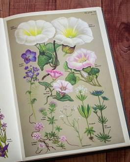 Цветы. Иллюстрация из книги 1977 года. Артикул: twfobane_pl039