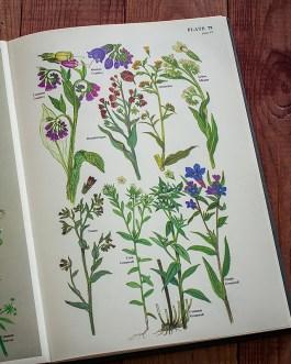 Цветы. Иллюстрация из книги 1977 года. Артикул: twfobane_pl040