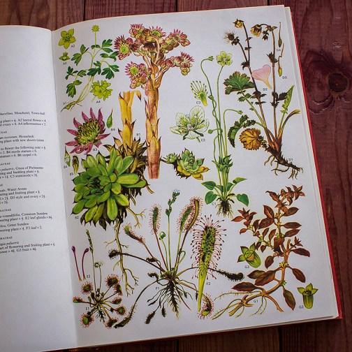 Дикие цветы. Иллюстрация из книги 1970 года. Артикул: wfw_pl016