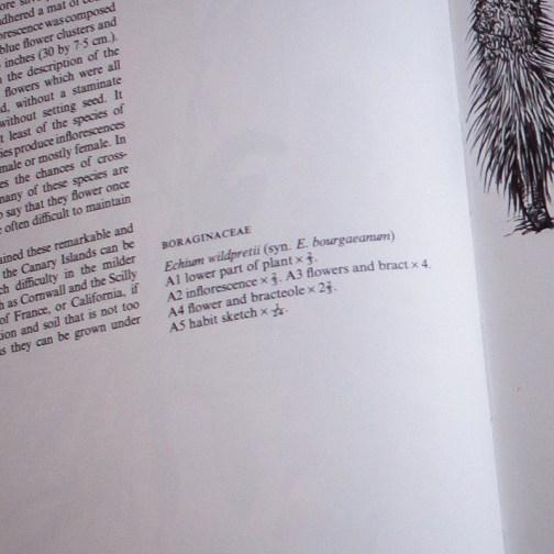 Ботаническая иллюстрация из книги 1970 года. Артикул: wfw_pl044