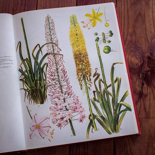 Дикие цветы. Иллюстрация из книги 1970 года. Артикул: wfw_pl050