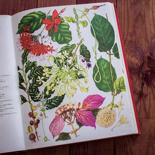 Дикие цветы. Иллюстрация из книги 1970 года. Артикул: wfw_pl060