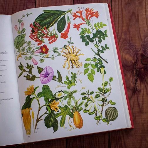 Дикие цветы. Иллюстрация из книги 1970 года. Артикул: wfw_pl079