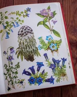 Дикие цветы. Иллюстрация из книги 1970 года. Артикул: wfw_pl097