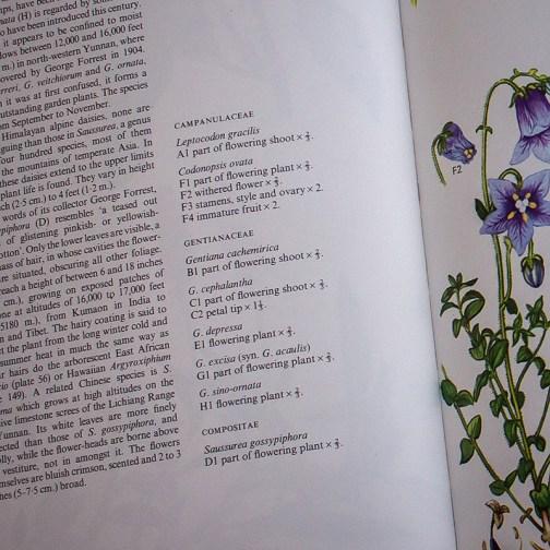 Ботаническая иллюстрация из книги 1970 года. Артикул: wfw_pl097