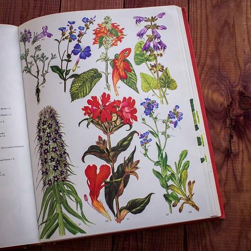 Дикие цветы. Иллюстрация из книги 1970 года. Артикул: wfw_pl105