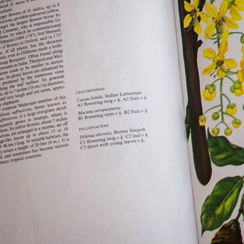 Ботаническая иллюстрация из книги 1970 года. Артикул: wfw_pl112