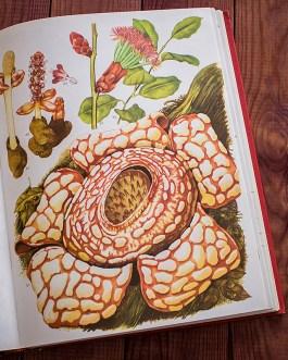 Дикие цветы. Иллюстрация из книги 1970 года. Артикул: wfw_pl117