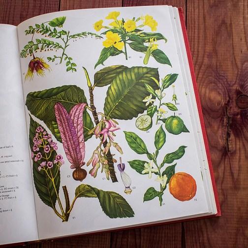 Дикие цветы. Иллюстрация из книги 1970 года. Артикул: wfw_pl119