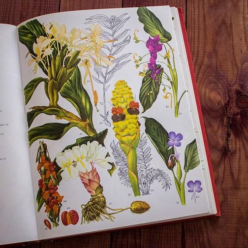 Дикие цветы. Иллюстрация из книги 1970 года. Артикул: wfw_pl124
