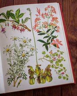 Дикие цветы. Иллюстрация из книги 1970 года. Артикул: wfw_pl133