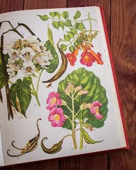 Дикие цветы. Иллюстрация из книги 1970 года. Артикул: wfw_pl162
