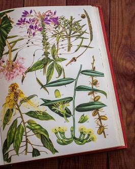 Дикие цветы. Иллюстрация из книги 1970 года. Артикул: wfw_pl174