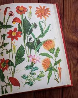Дикие цветы. Иллюстрация из книги 1970 года. Артикул: wfw_pl186