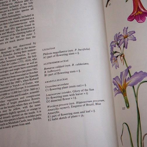 Ботаническая иллюстрация из книги 1970 года. Артикул: wfw_pl190