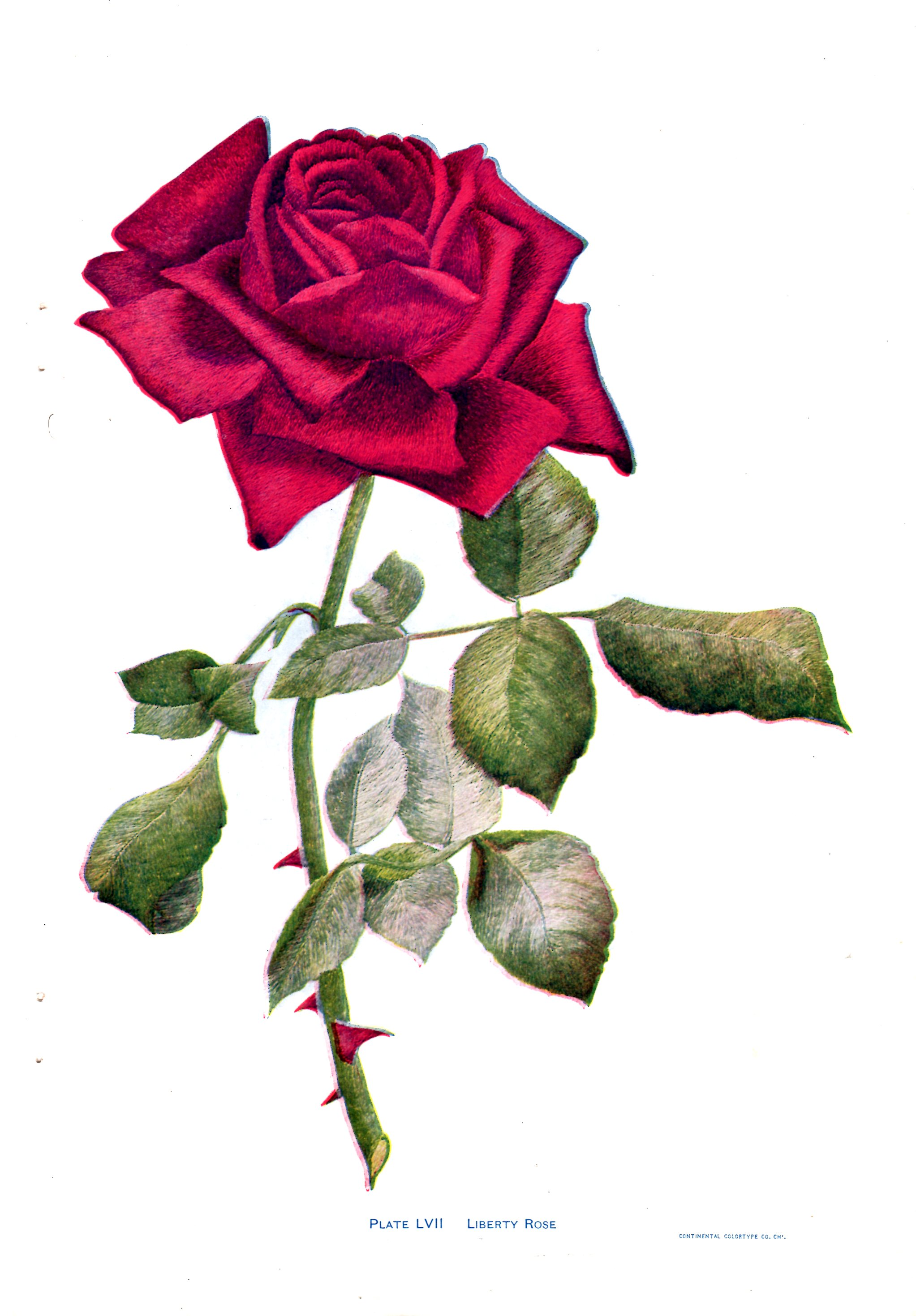 red rose embroidery pattern
