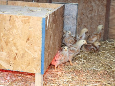 brooder heater