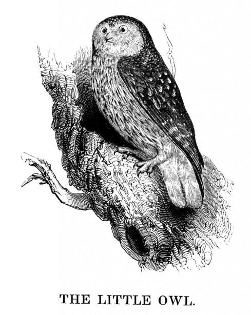 vgosn_cute_owl_clip_art_image (1)