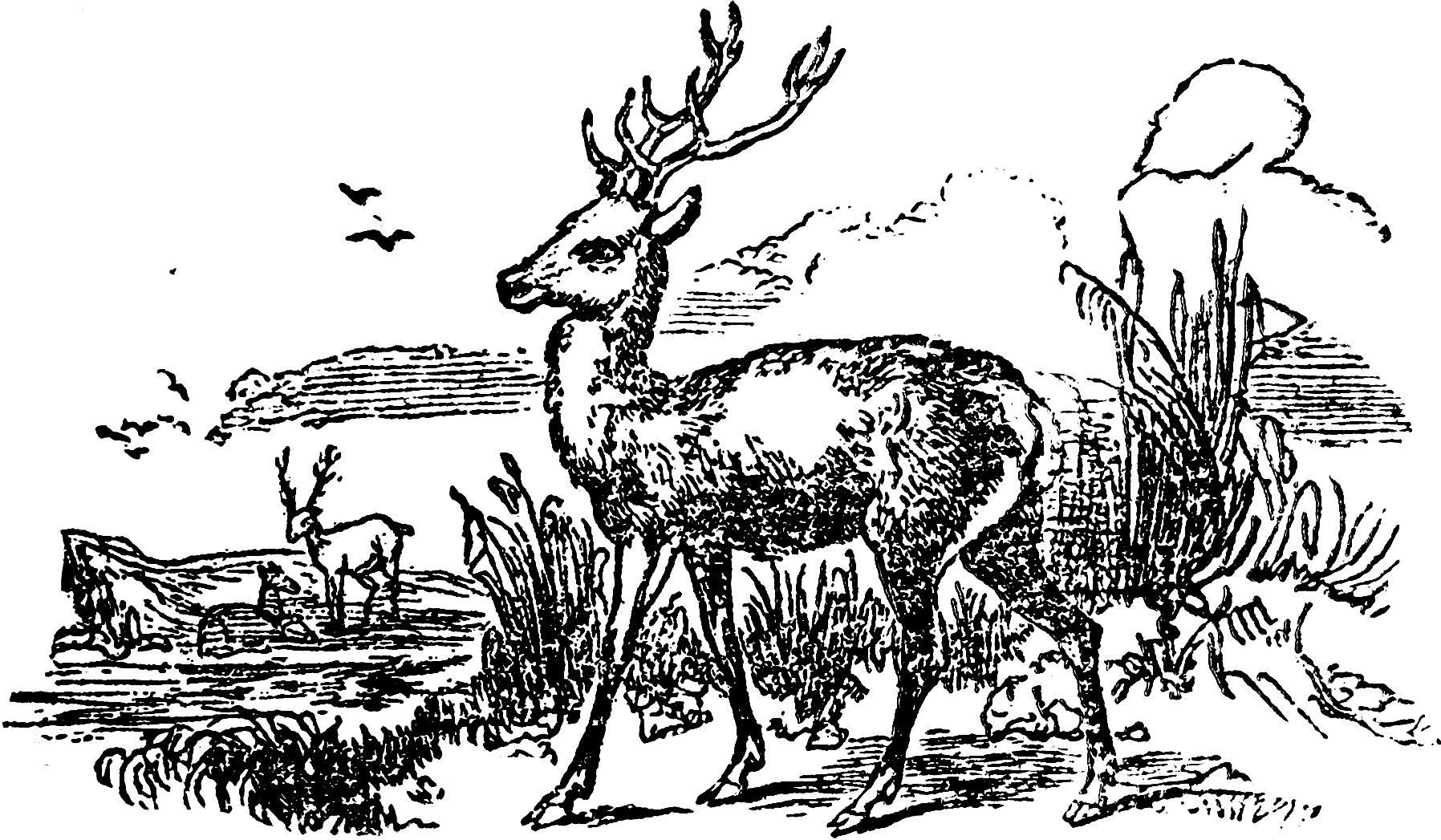 Vintage Deer Illustration Clip Art Image