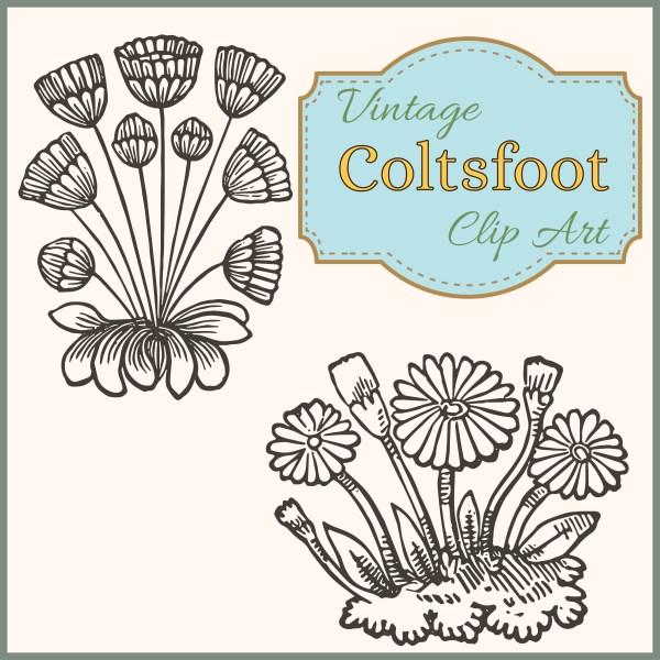 vintage coltsfoot spring garden