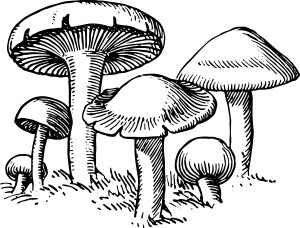mushroom clip drawing clipart vector mushrooms decomposer outline printable buffer drawings line graphics graphic vgosn pdf