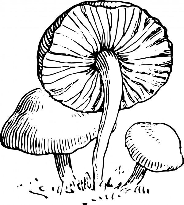 vgosn_mushroom_vintage_vector_clip_art_3