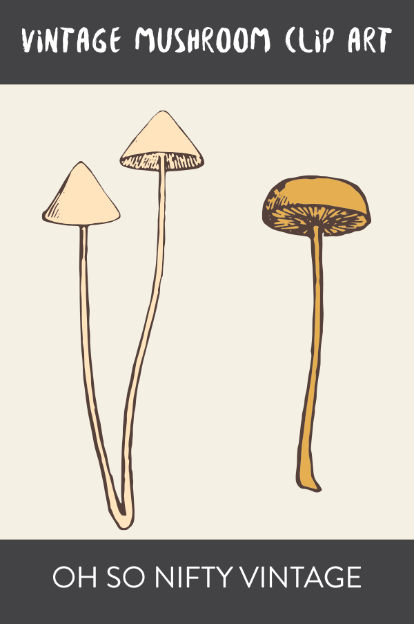 Stock Images | Vintage Mushrooms