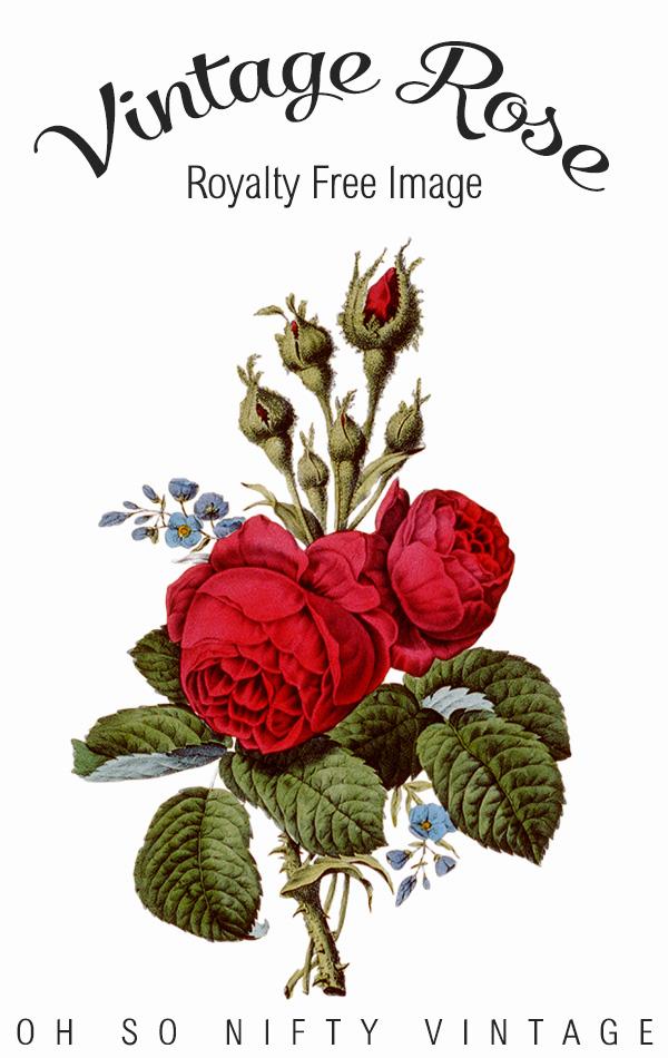 Vintage Rose Royalty Free Image No. 2