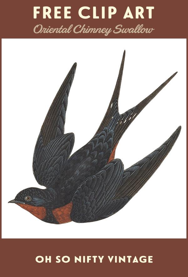 Vintage Swallow Clip Art
