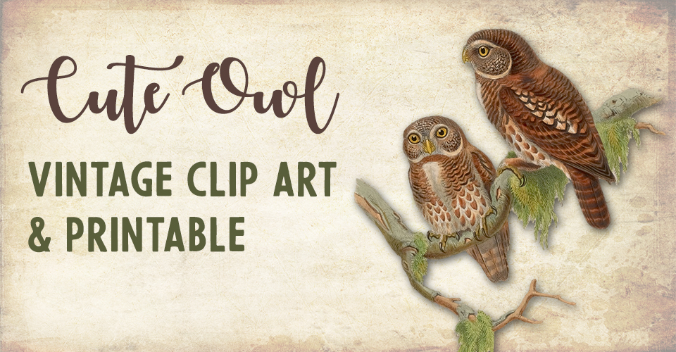 Cute Owl Clip Art & Printable Illustration