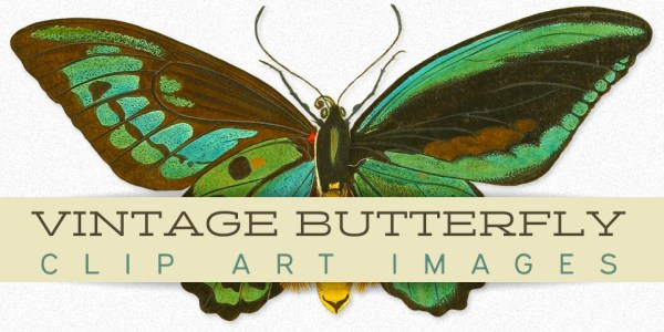 Vintage Butterfly Clip Art Image