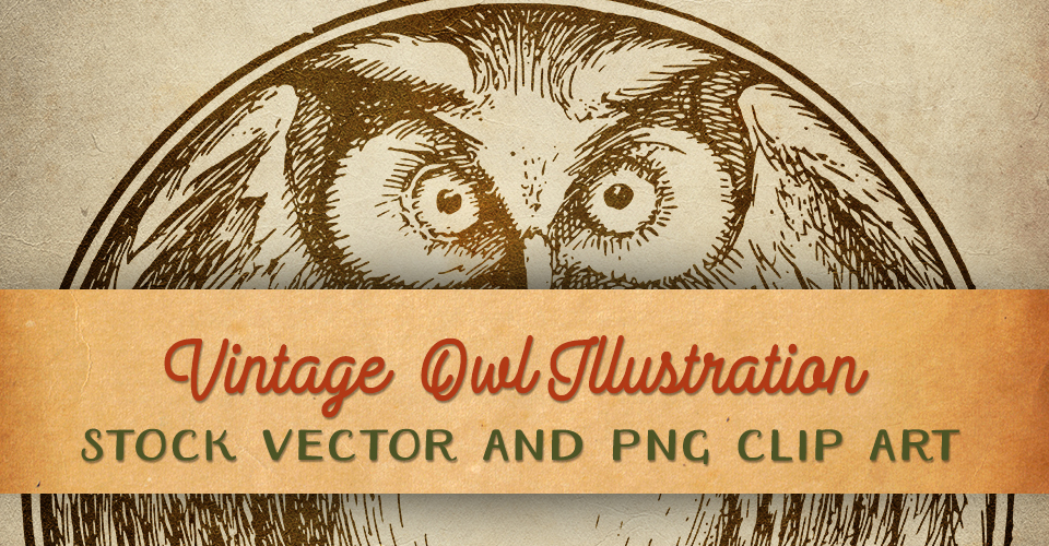 Vintage Owl Illustration - Stock Vector & Clip Art