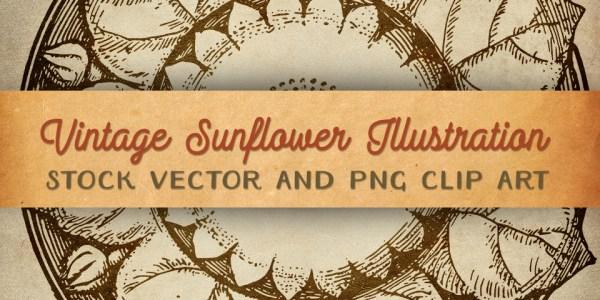 Vintage Sunflower Illustration - Clip Art & Stock Vector