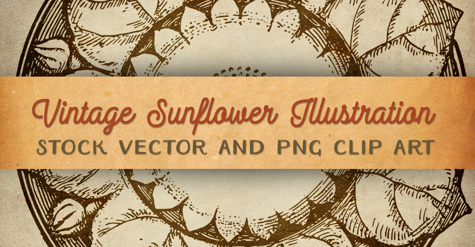 Vintage Sunflower Illustration - Clip Art & Stock Vector