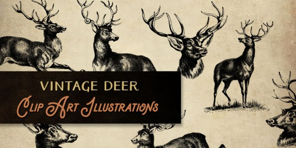 Fantastic Vintage Deer Clip Art Illustrations