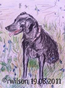 Izzy (watercolour pencil)