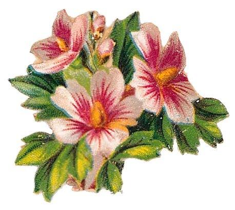 free vintage flowers clip art