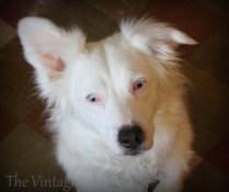 Bindi - Adopted!