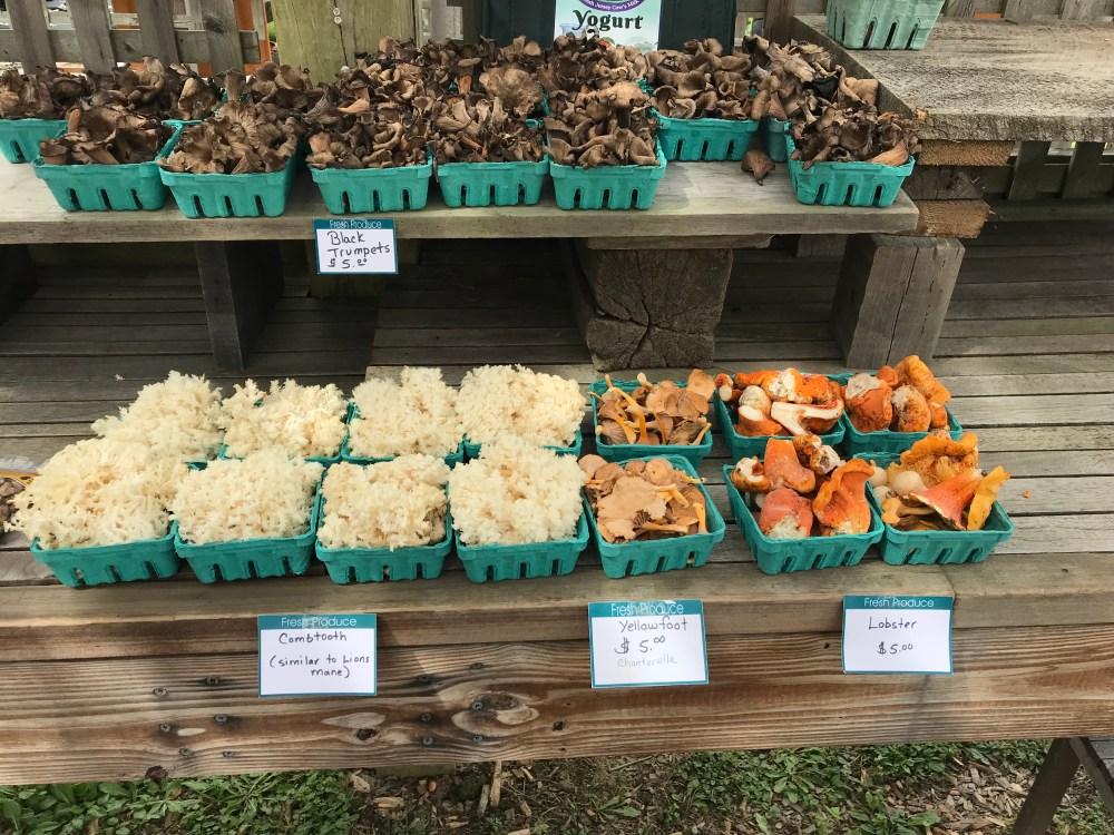 mushrooms at farmrs market