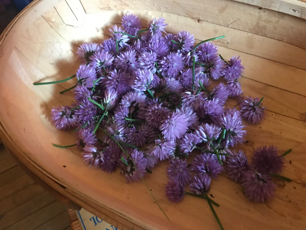 fresh chive blossoms