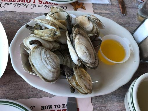 Maine steamers.