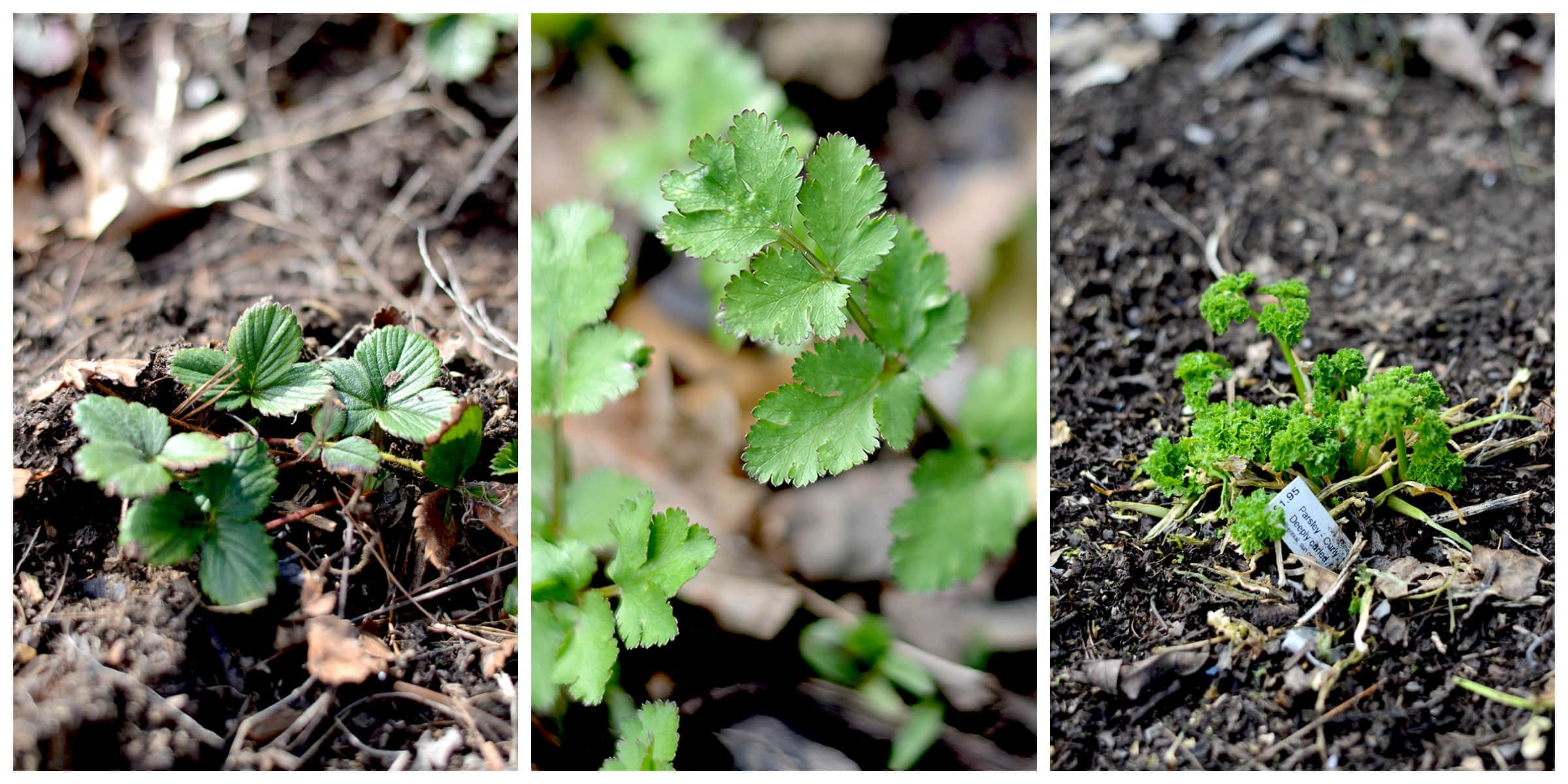 The arrival of spring means its time to start working on your vegetable and herb gardens. Follow these Seed Starting Tips to get started!   vintagekitty.com