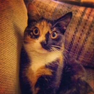 Hi I'm Tilly